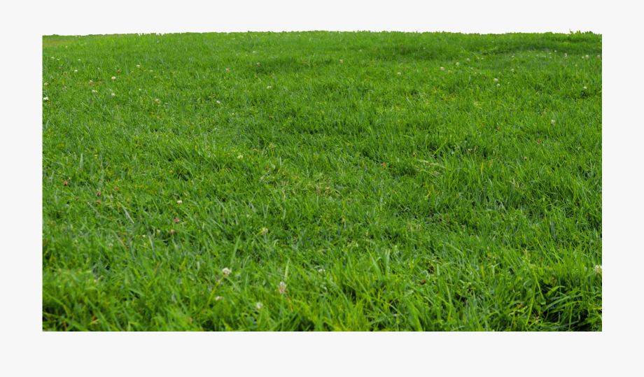 Grass For Photoshop Png, Cliparts & Cartoons.
