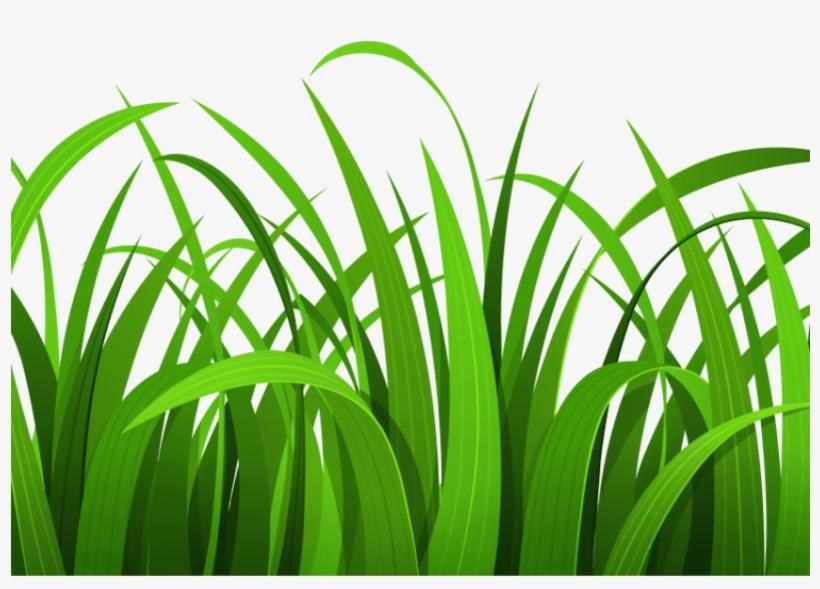 Best Grass Clipart.