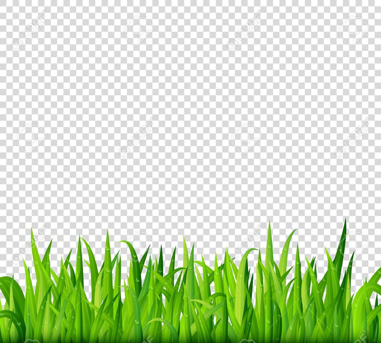 Grass Transparent Background & Free Grass Transparent.