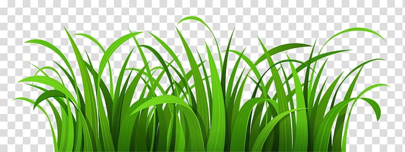 Lawn , Easter Grass transparent background PNG clipart.
