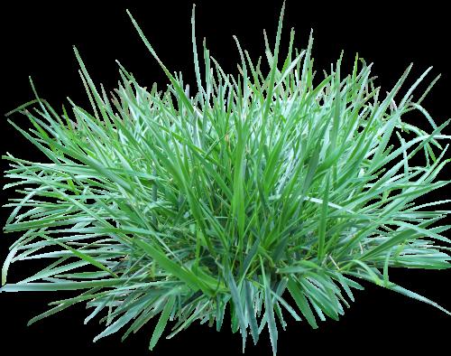 Green Grass Eleven.
