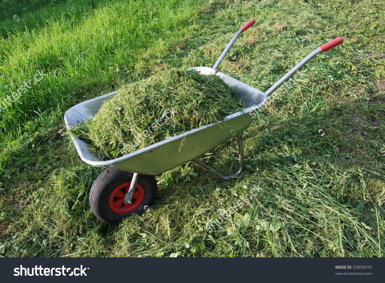 Wheelbarrow On Lawn Fresh Grass Clippings Stock Photo 55859410.