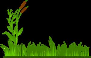 swamp grass clipart #15