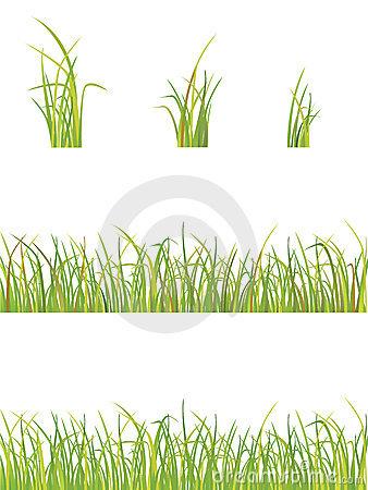 Fringe Grass Stock Illustrations.