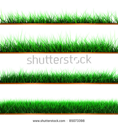 Green Fringes Grass White Stock Photos, Royalty.