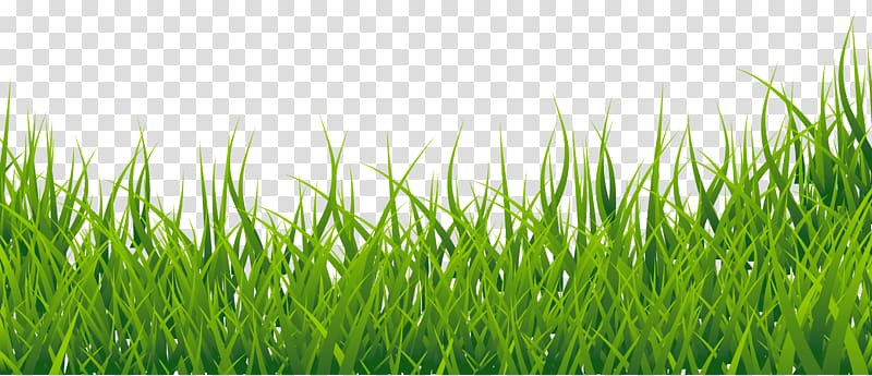 Green grass , Easy English Vocabulary , Grass Border.