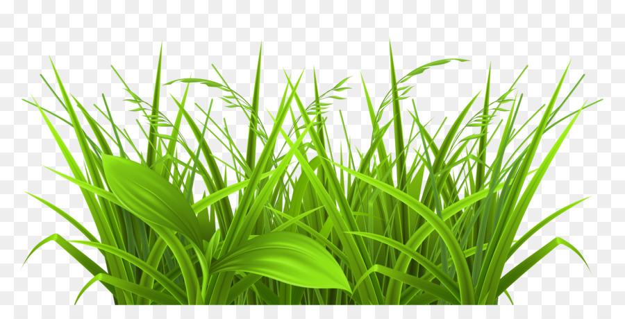 Grasses PNG HD Transparent Grasses HD.PNG Images..