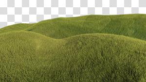 Grassy Hill, green grass field transparent background PNG.