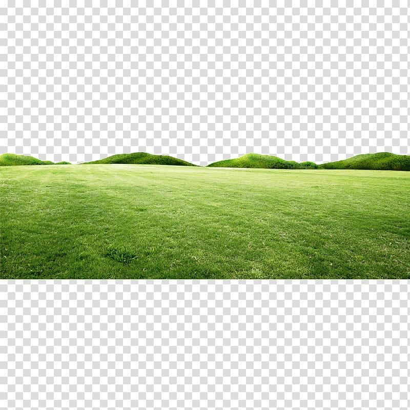 Green open field, Fresh spring green grass hill transparent.