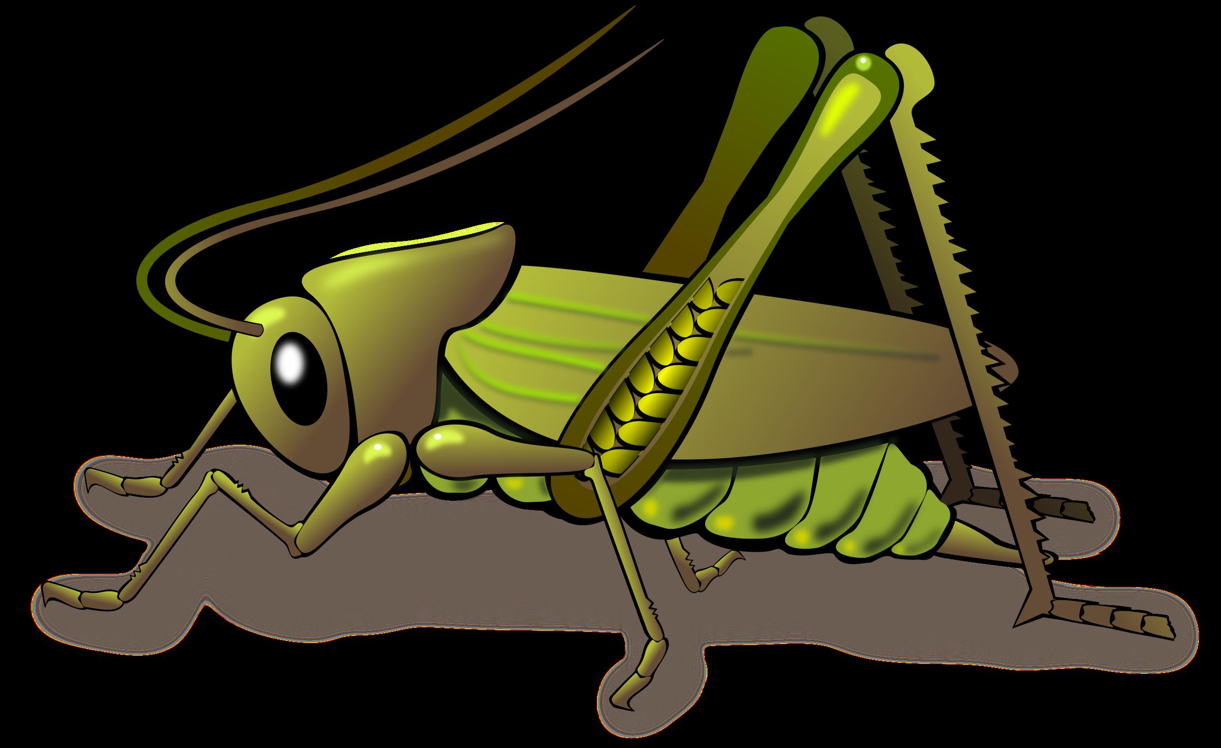 Grasshopper Clipart & Grasshopper Clip Art Images.