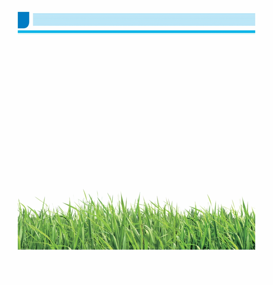 Brochure School Grass Lawn Meadow Png Image With.