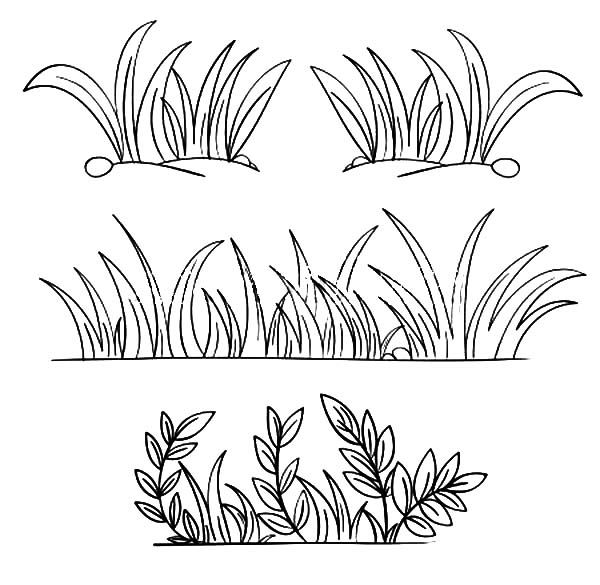 Grass, : Grass Grow so Well Coloring Pages.