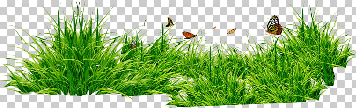 Grass Patch With Insects, green plant PNG clipart.