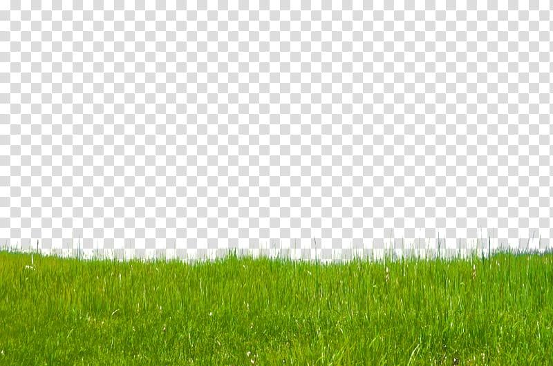 Grass on Hillside , green grass transparent background PNG.