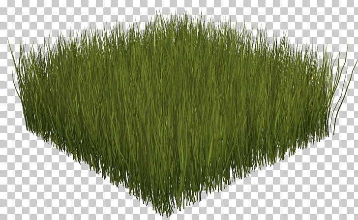 Portable Network Graphics Adobe Photoshop, field grass PNG.