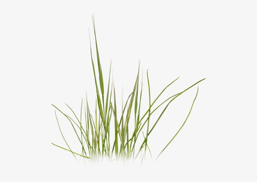 Grass Photoshop, Photoshop Texture, Photoshop Design.