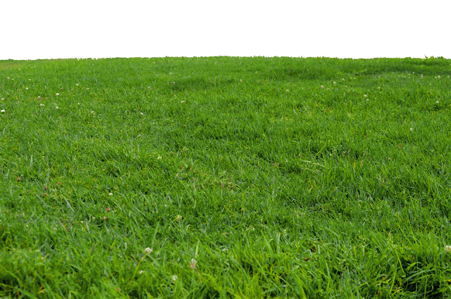 Grass PNG Images Free Download.
