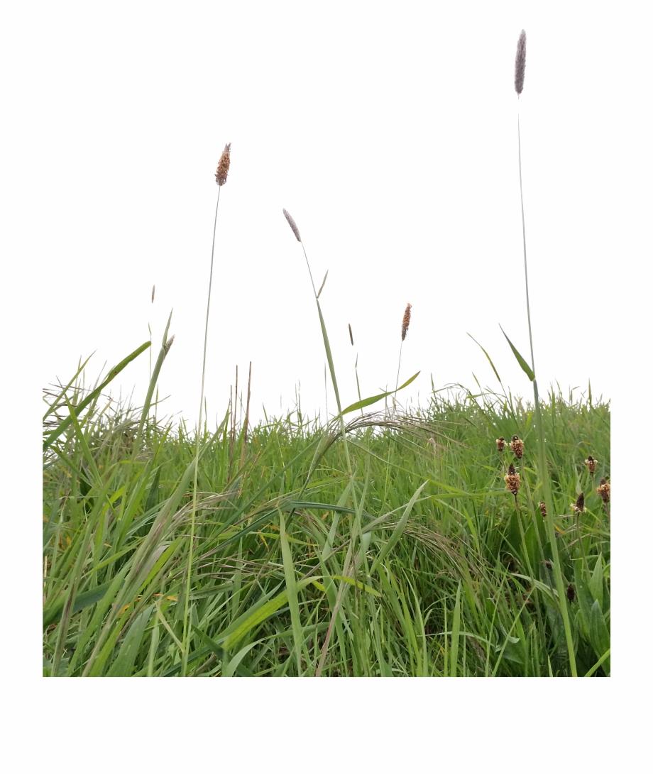 Long Grass Png.