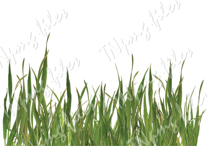 PNG GRASS, Cutting Photoshop file Download, discount coupons, jpg, pdf,  flora.