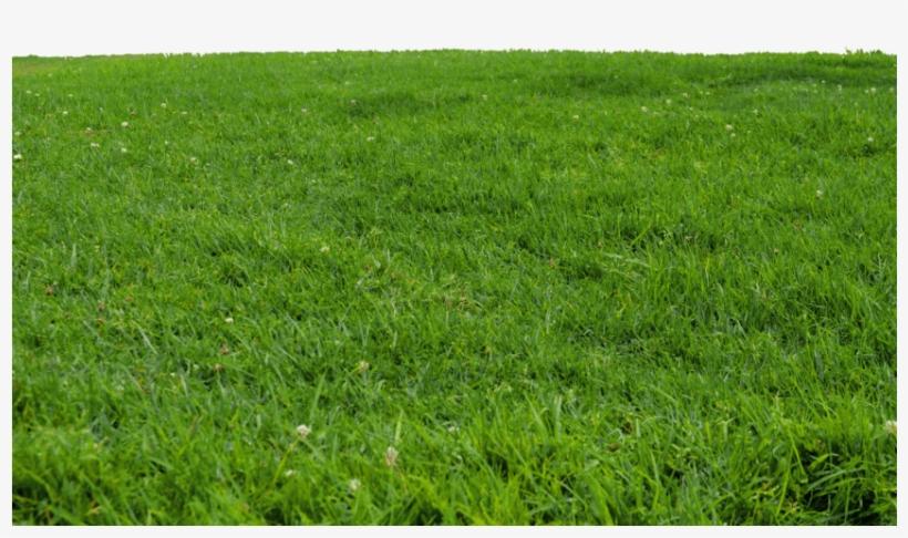 Grass Photoshop, Tree Photoshop, Photoshop Brushes,.