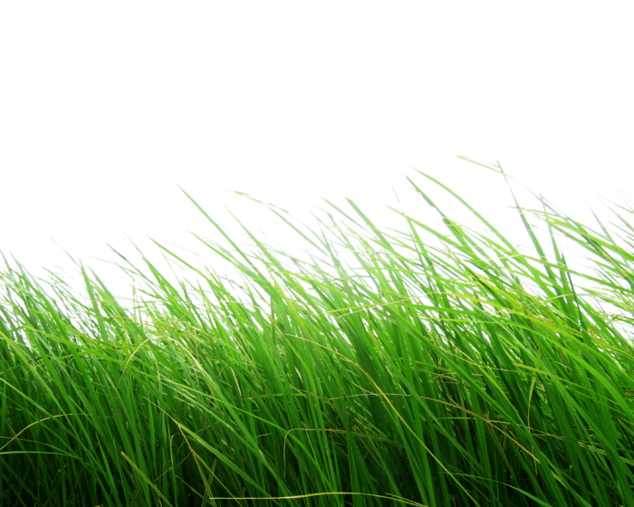 Grass Png For Photoshop Vector, Clipart, PSD.