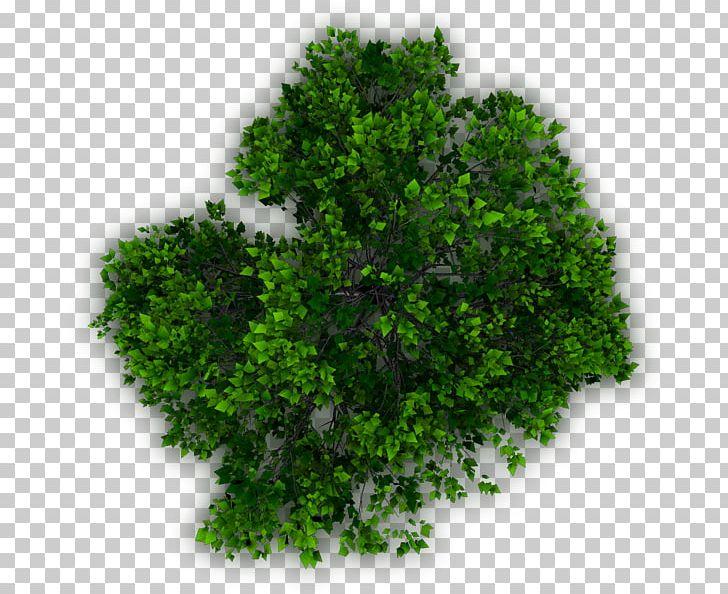Tree Landscape Plan Architecture PNG, Clipart, Architecture.
