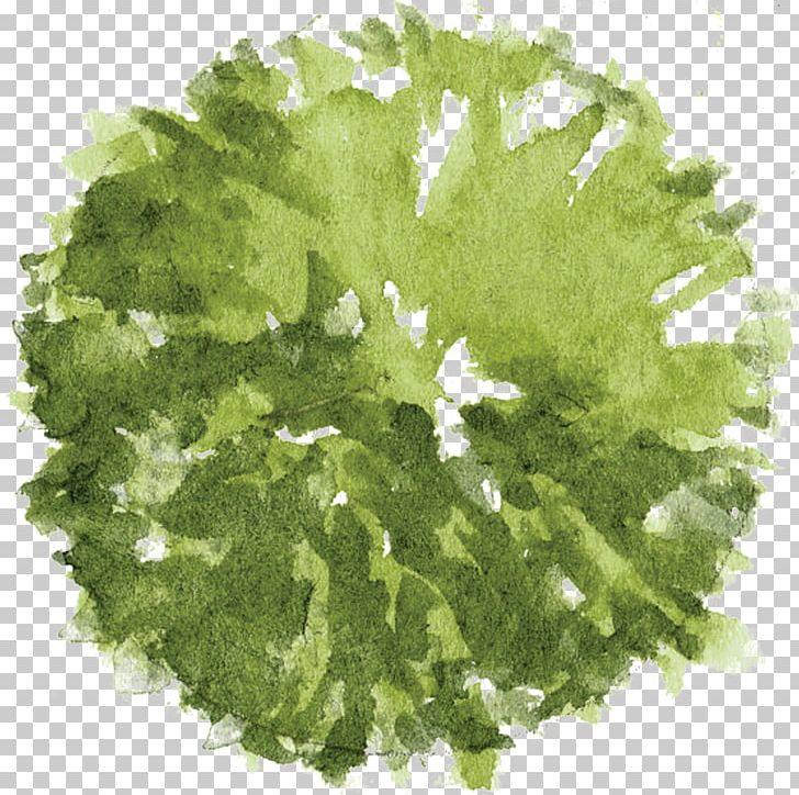 Tree Architectural Plan Landscape Architecture PNG, Clipart.