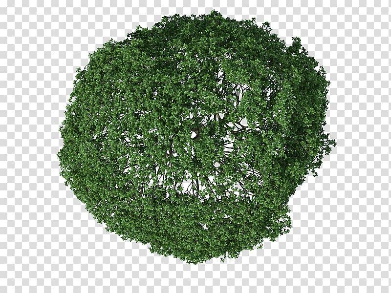 Green leafed tree illustration, , tree plan transparent.
