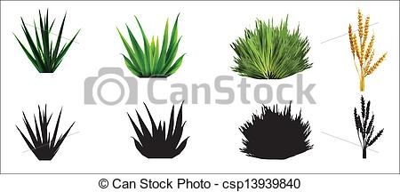 EPS Vector of grass plant,wheat.