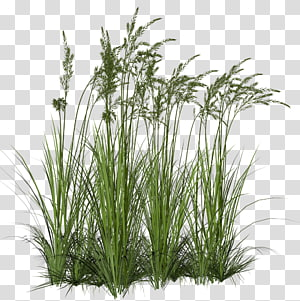 Grass Hope transparent background PNG clipart.