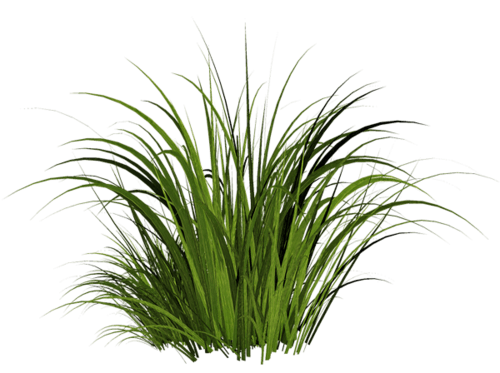 Grass transparent PNG.