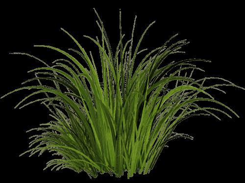 Grass transparent PNG.