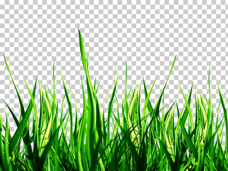 Nature , Nature , green grass PNG clipart.