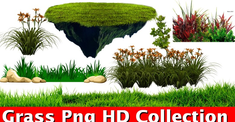 Grass png For Picsart And photoshop Editing New Collection HD.