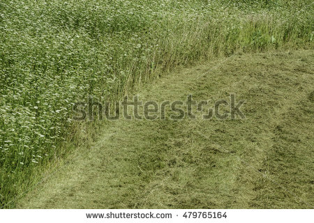 Tall thin curved grass clipart.