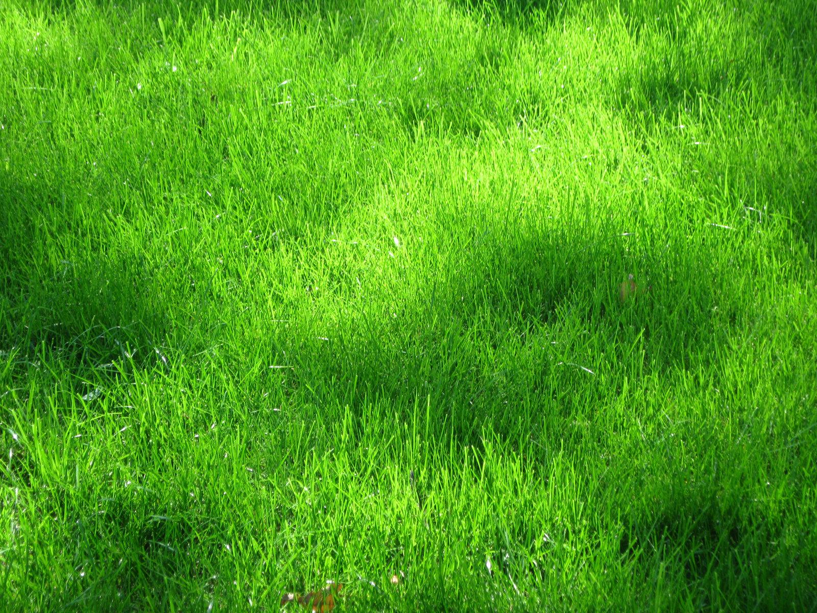 Grass, grass, texture, texture and backgrounds grass, green.