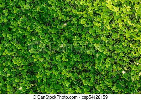 Top view of real natural organic grass..