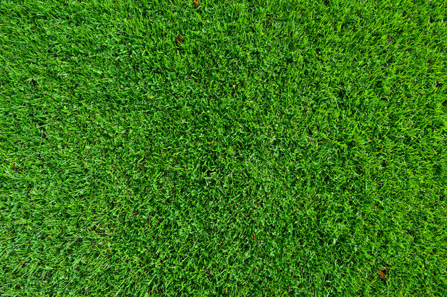 Top View Of Green Grass Perspective, Top, View, Grass Background.