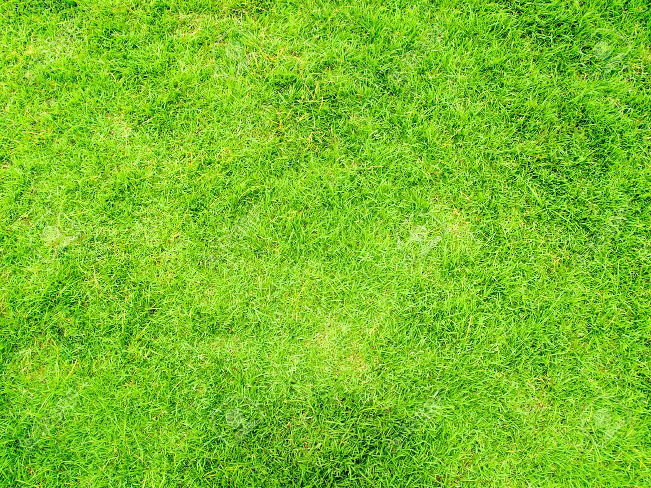 grass top view png #3