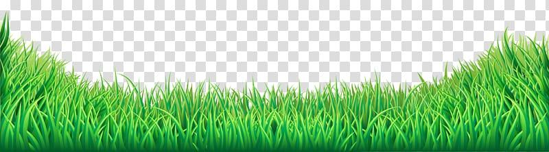 Lawn , Grass , green grass transparent background PNG.