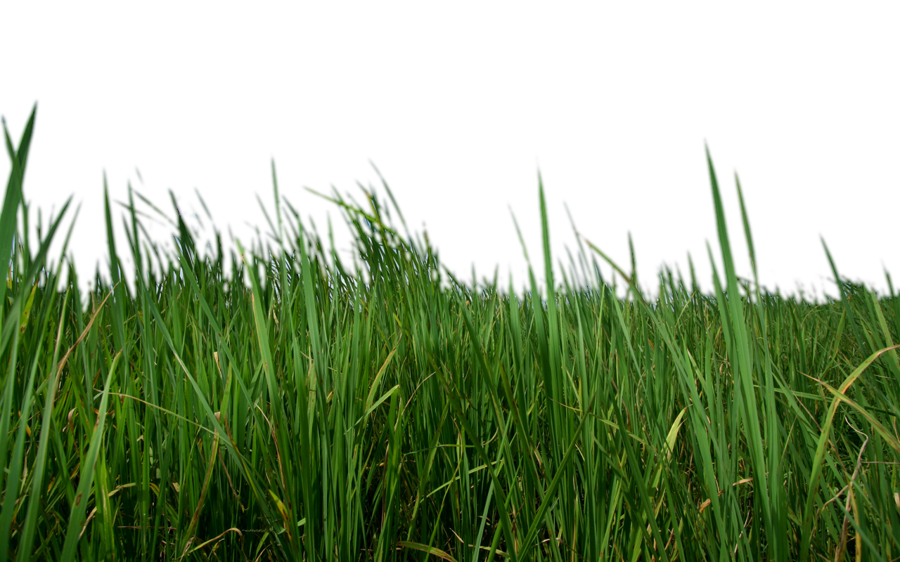 Grass Png Strands Image Clipart.
