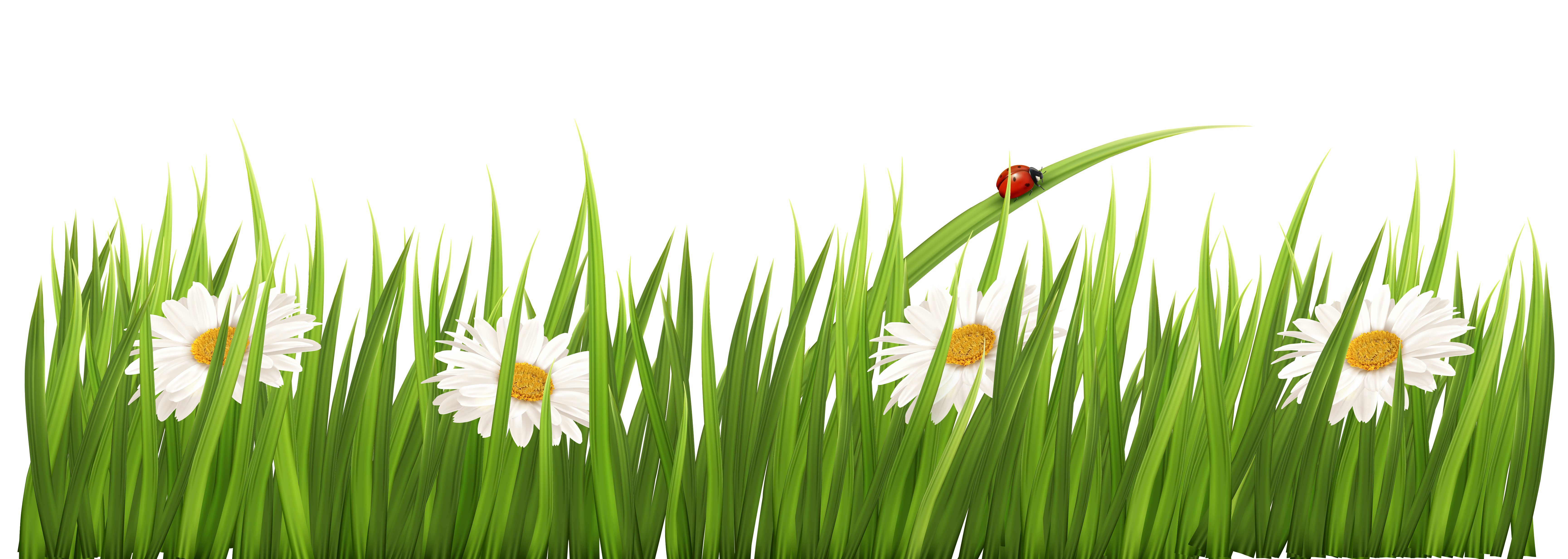 Wheatgrass Meadow Commodity Computer Wallpaper.