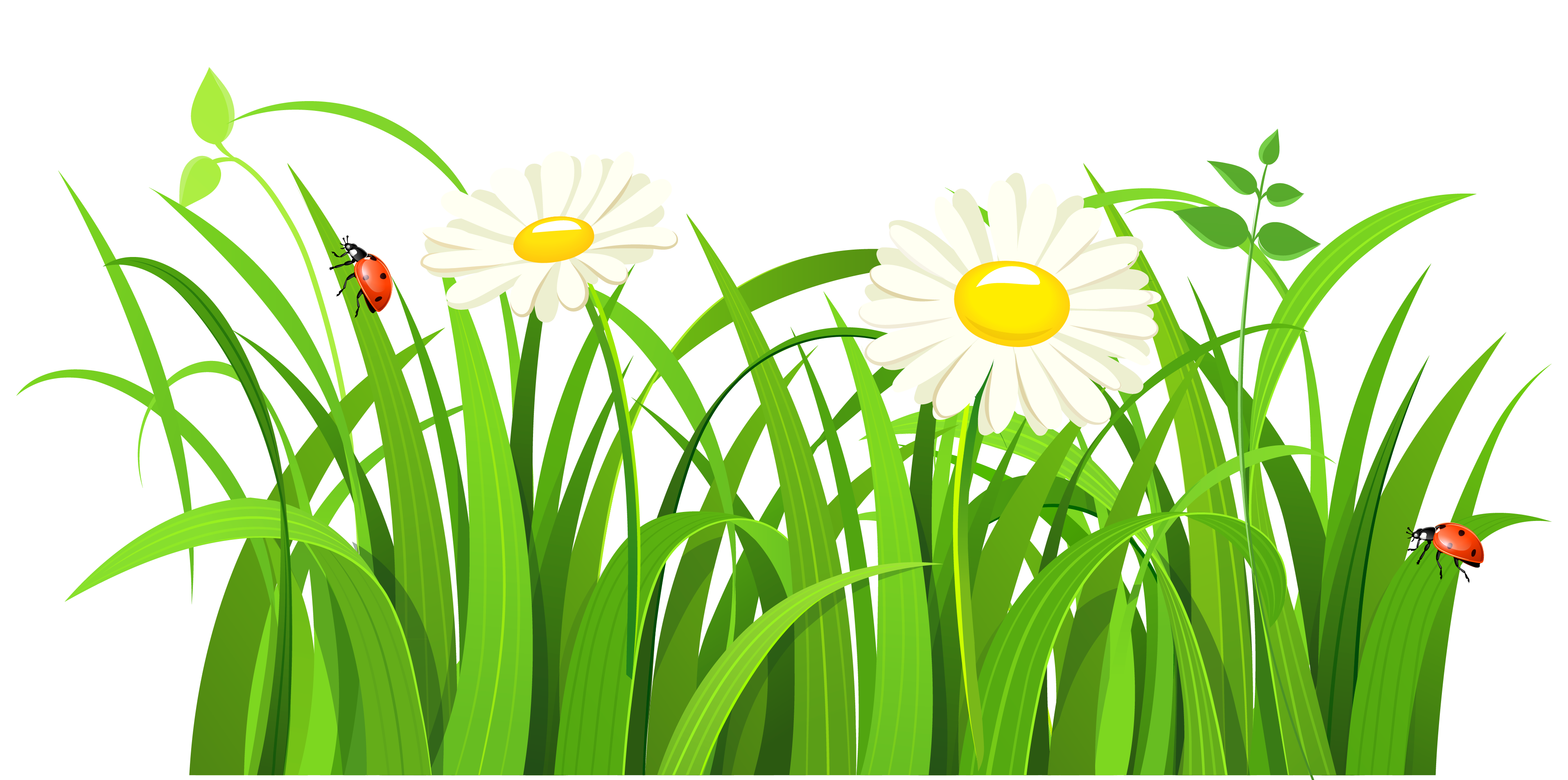 Grass clipart images.