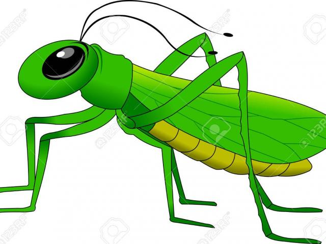 Grasshopper clipart logo, Grasshopper logo Transparent FREE.