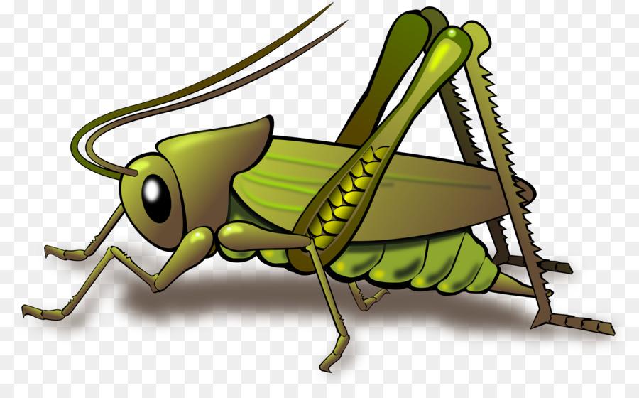 grasshopper clipart Insect Grasshopper Clip art clipart.