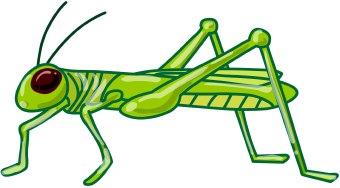 Free Grasshopper Cliparts, Download Free Clip Art, Free Clip.