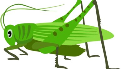 Grasshopper Clipart at GetDrawings.com.