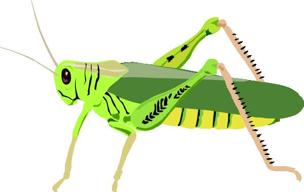 Grasshopper Clipart Images.