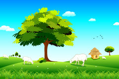 Sheep Grassland Stock Illustrations.
