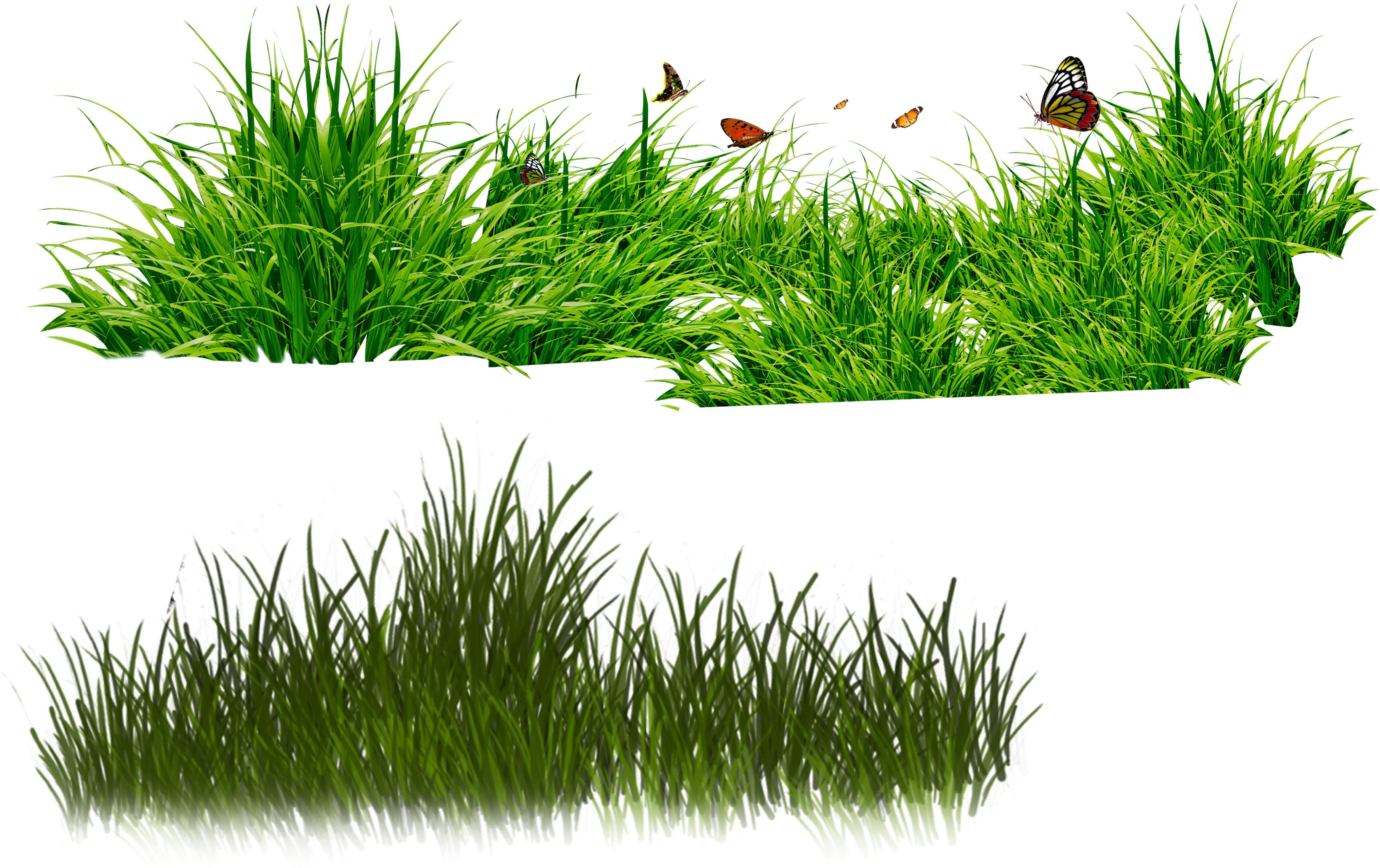 Grass Clipart.